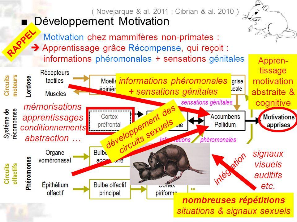 D26 : Modèles : Mammifères 18 : Facteurs acquis 5 Motivation chez mammifères non-primates : Apprentissage grâce Récompense, qui reçoit : informations phéromonales + sensations génitales ( Novejarque & al.