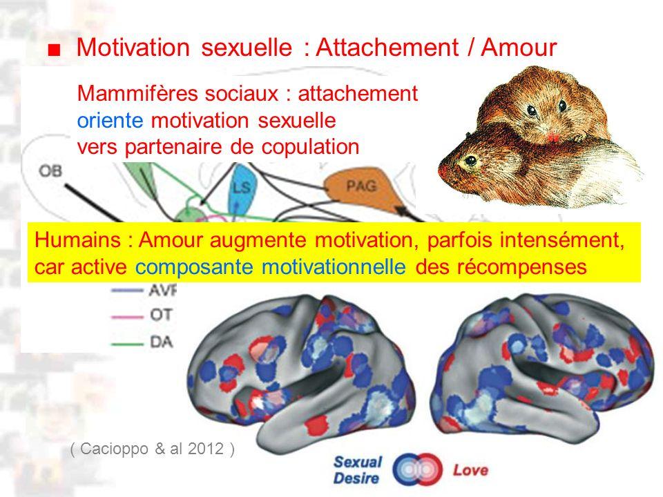 D76 : Modèles : Homme 20 : Développement & Dynamique 8 Motivation sexuelle : Attachement / Amour Mammifères sociaux : attachement oriente motivation sexuelle vers partenaire de copulation Humains : Amour augmente motivation, parfois intensément, car active composante motivationnelle des récompenses ( Cacioppo & al 2012 )