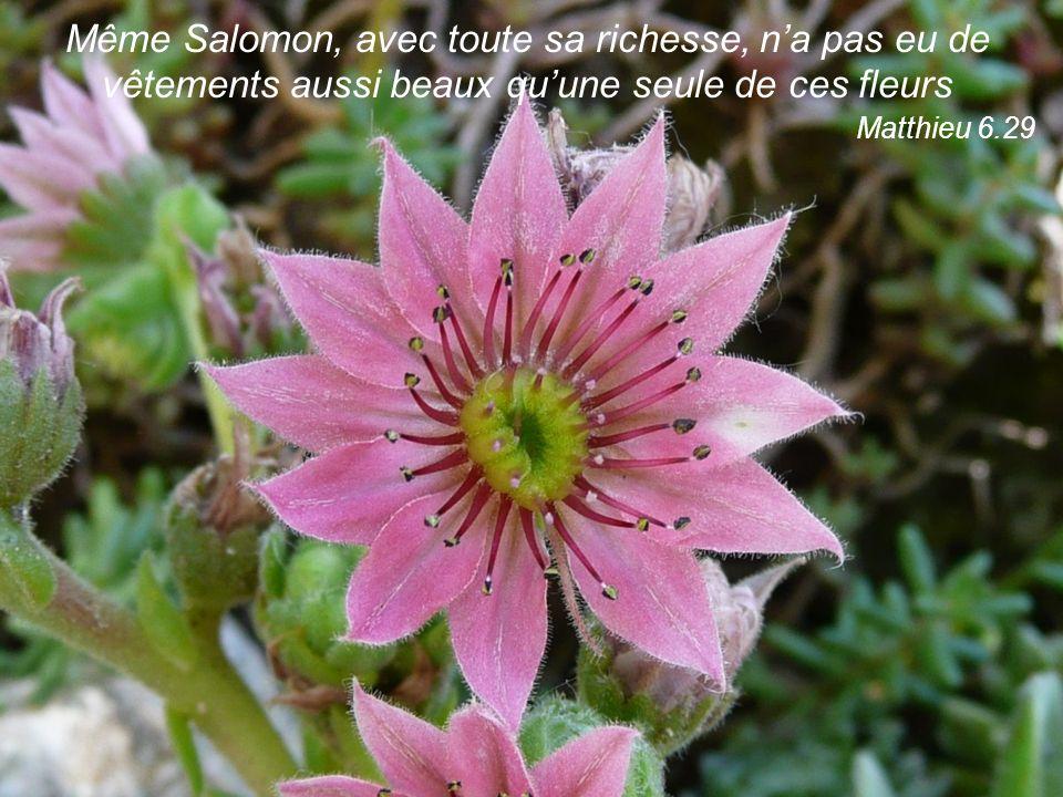 Même Salomon, avec toute sa richesse, na pas eu de vêtements aussi beaux quune seule de ces fleurs Matthieu 6.29