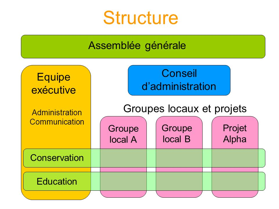 Structure Equipe exécutive Conseil dadministration Assemblée générale Groupes locaux et projets Conservation Education Administration Communication Groupe local A Groupe local B Projet Alpha