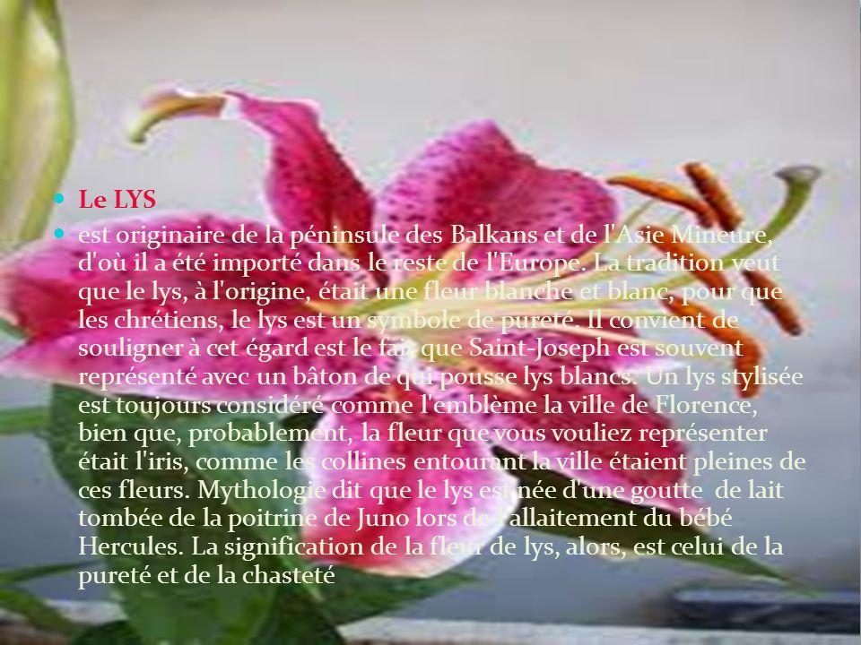 Le LYS est originaire de la péninsule des Balkans et de l Asie Mineure, d où il a été importé dans le reste de l Europe.