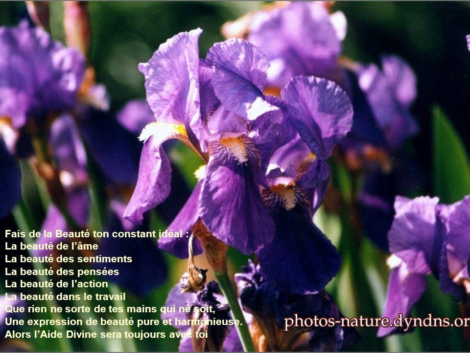 Fais de la Beauté ton constant idéal : La beauté de lâme La beauté des sentiments La beauté des pensées La beauté de laction La beauté dans le travail