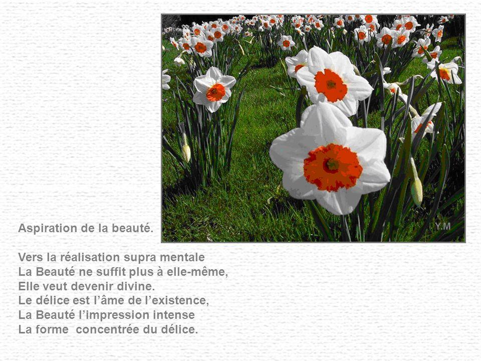 Aspiration de la beauté.