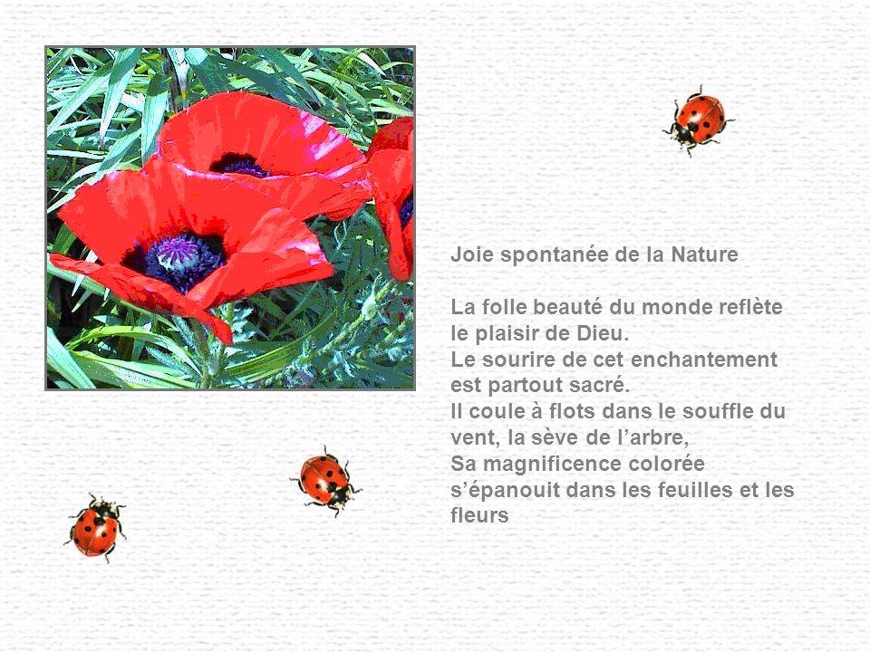 Joie spontanée de la Nature La folle beauté du monde reflète le plaisir de Dieu.