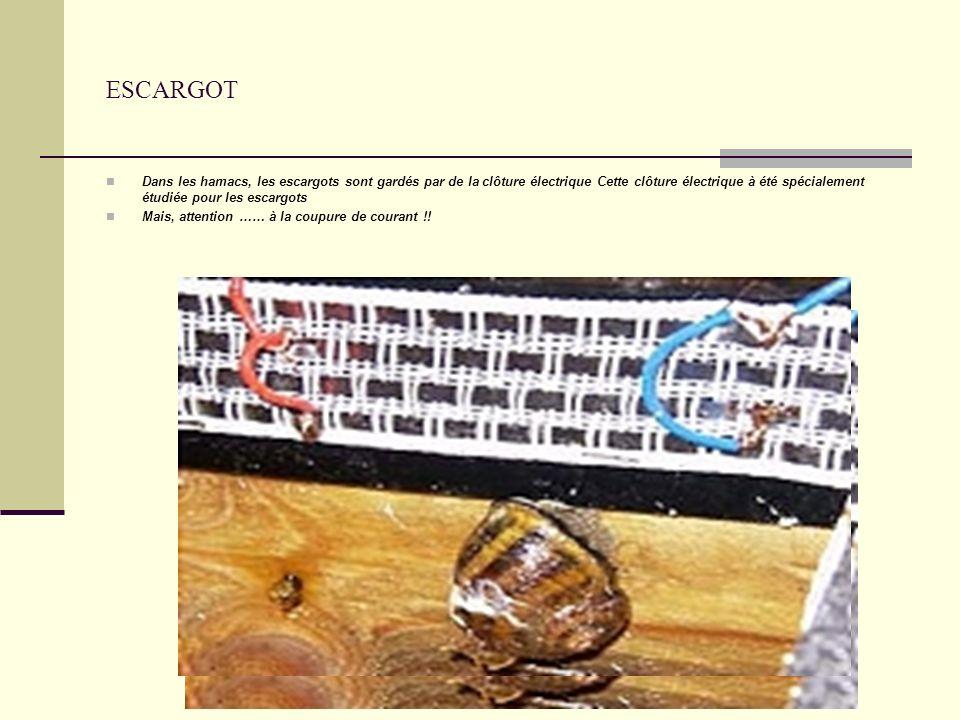 ESCARGOT Dans les hamacs, les escargots sont gardés par de la clôture électrique Cette clôture électrique à été spécialement étudiée pour les escargots Mais, attention …… à la coupure de courant !!