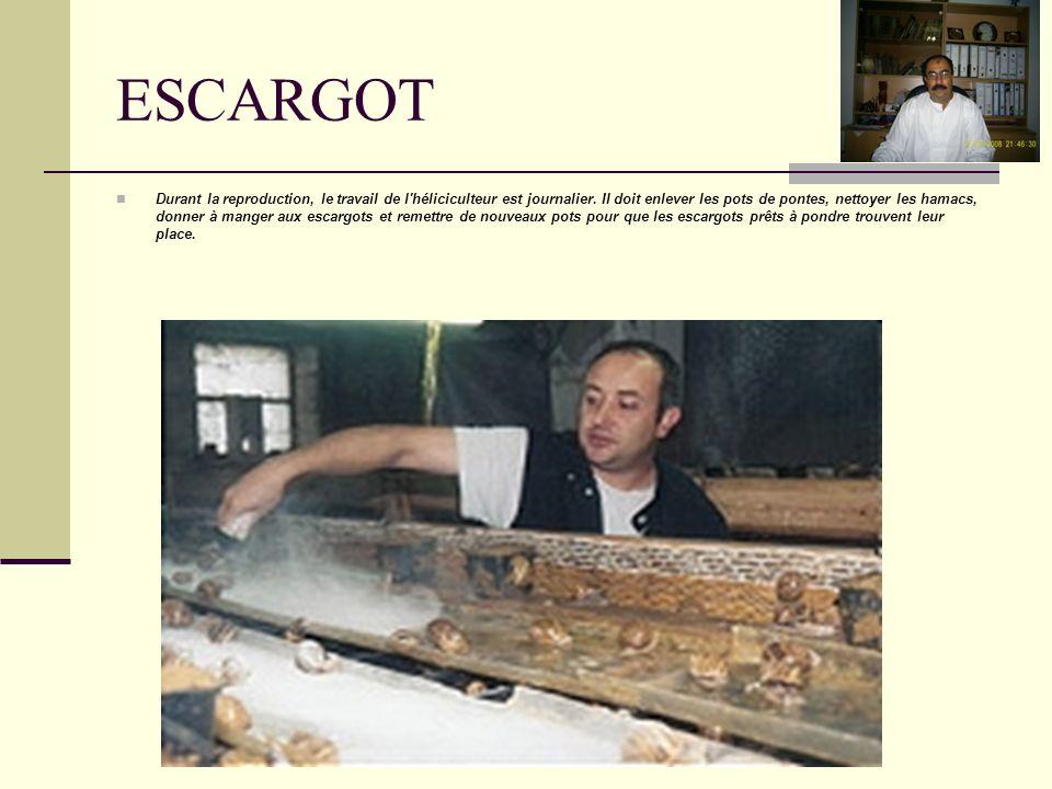 l accouplement Les escargots, dans la reproduction, ont un bon appétit, mais il faut bien doser la nourriture afin de ne pas les gaver , car leur rôle dans cet endroit est !.