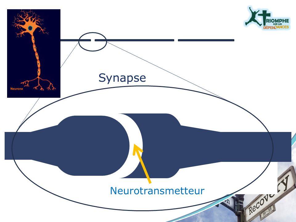 Synapse Neurotransmetteur Synapse