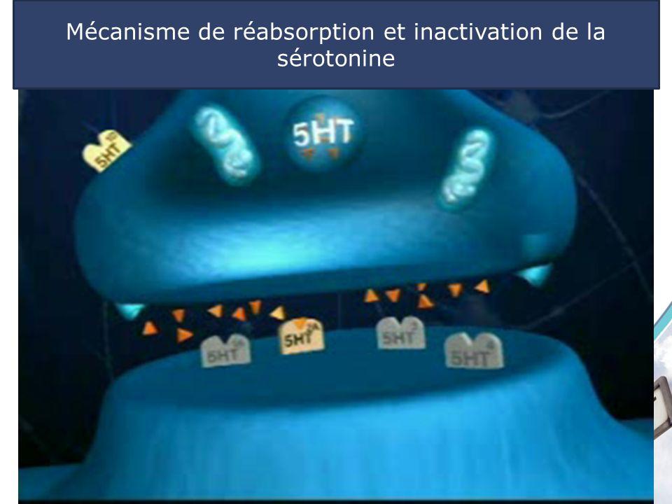 Vidéo sero 1 sero 2 sero 3 sero 4 http://fr.brainexplorer.org/ Neurobiologie des dépendances Mécanisme de réabsorption et inactivation de la sérotonin