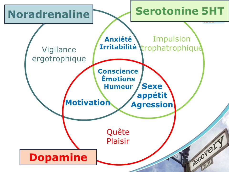 Noradrenaline Dopamine Vigilance ergotrophique Impulsion trophatrophique Quête Plaisir Conscience Émotions Humeur Motivation Anxiété Irritabilité Sexe