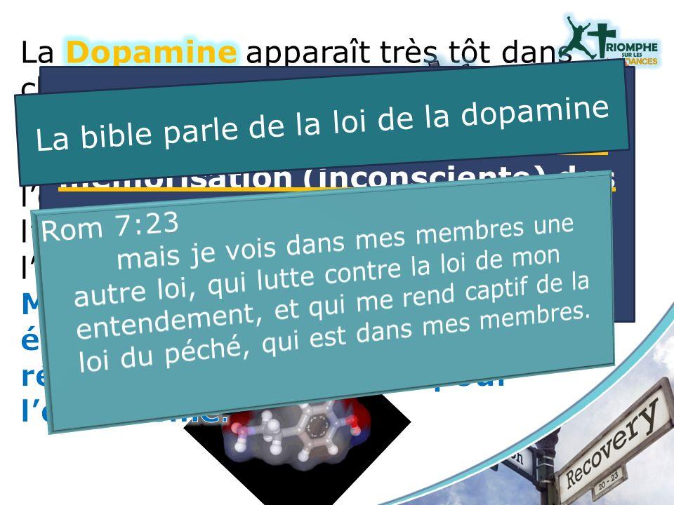 La dopamine participe aussi à la mémorisation (inconsciente) des indices associés à ces récompenses. La bible parle de la loi de la dopamine
