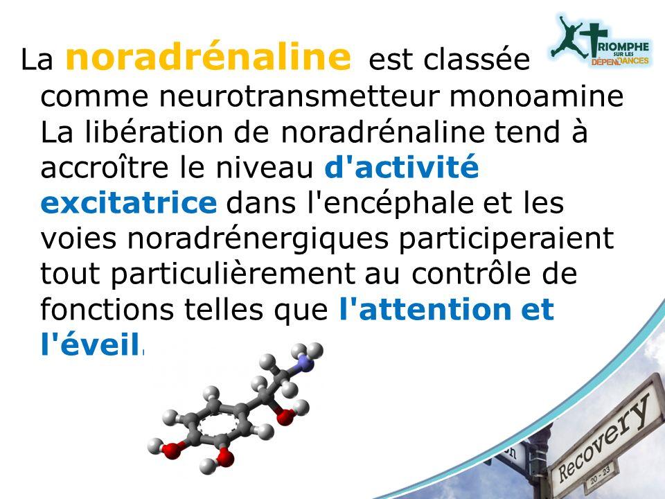 La noradrénaline est classée comme neurotransmetteur monoamine La libération de noradrénaline tend à accroître le niveau d'activité excitatrice dans l