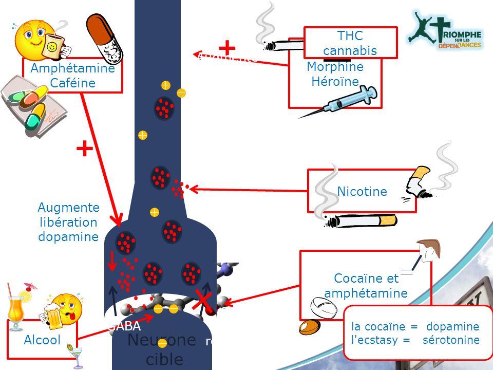 Neurone cible Amphétamine Caféine + Augmente libération dopamine Cocaïne et amphétamine Nicotine Morphine Héroïne Arrête dégradatio n MAO + Augmente a