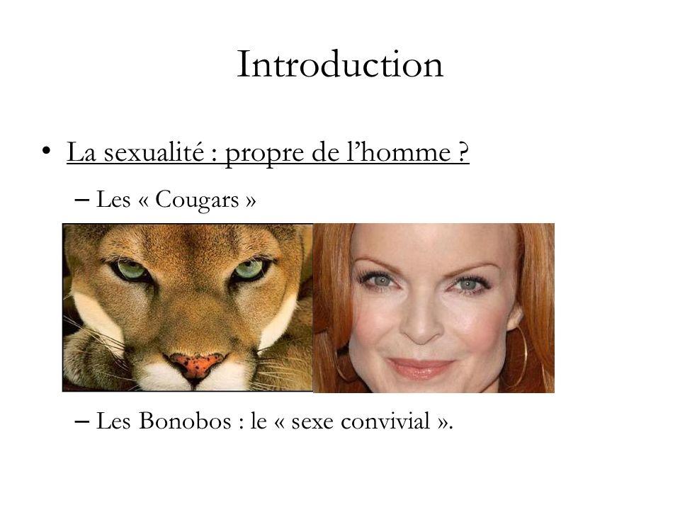 Introduction La sexualité : de lanimalité au « septième ciel » – Les Bonobos : le « sexe convivial »