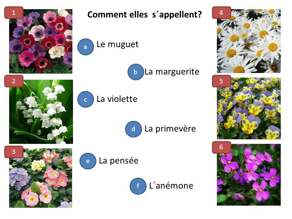 L´anémone Le muguet La marguerite La primevère La violette La pensée a b c d e f 1 2 3 4 5 6 Comment elles s´appellent