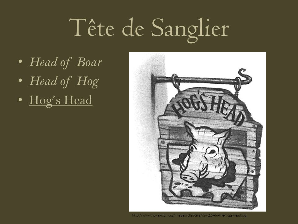 Tête de Sanglier Head of Boar Head of Hog Hogs Head http://www.hp-lexicon.org/images/chapters/op/c16--in-the-hogs-head.jpg
