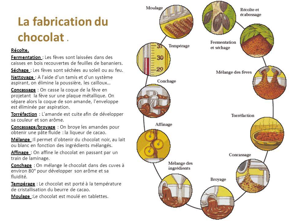 La fabrication du chocolat. Récolte.