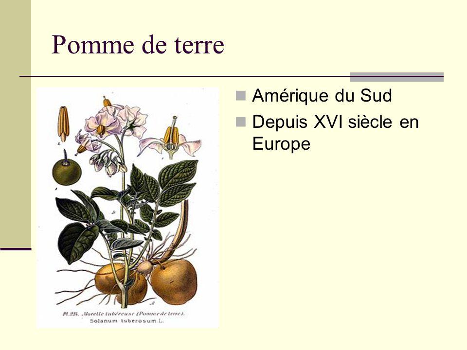 Pomme de terre Amérique du Sud Depuis XVI siècle en Europe