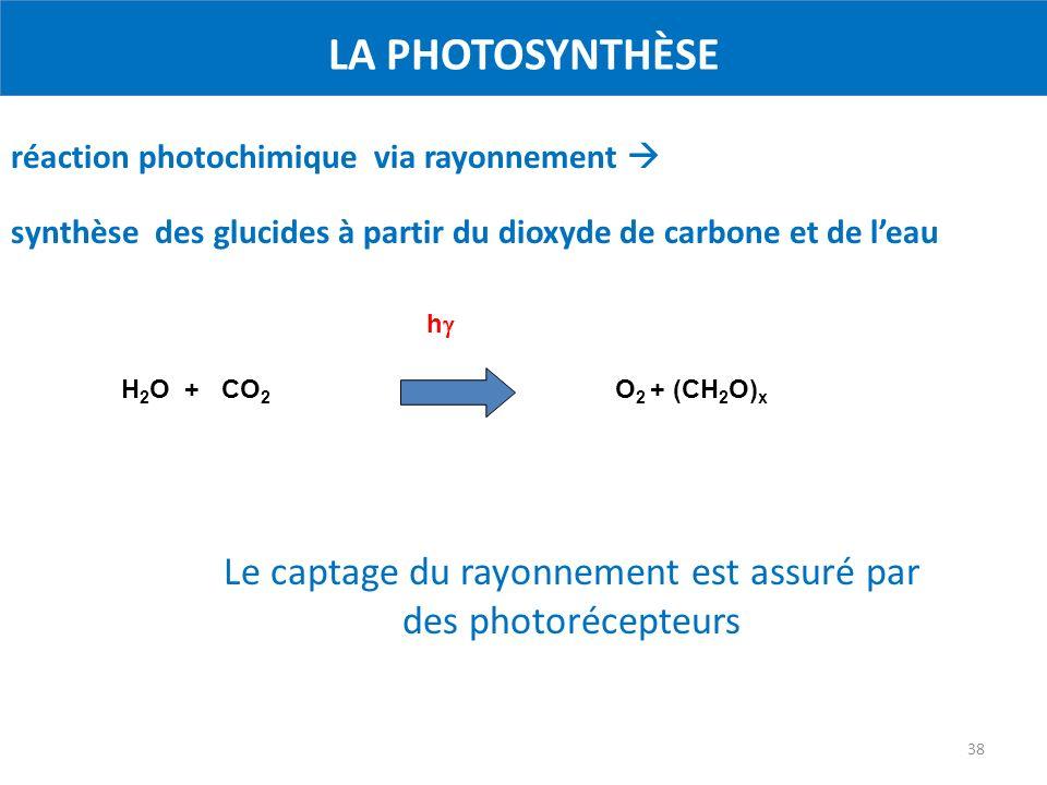 38 LA PHOTOSYNTHÈSE H 2 O + CO 2 O 2 + (CH 2 O) x h réaction photochimique via rayonnement synthèse des glucides à partir du dioxyde de carbone et de leau Le captage du rayonnement est assuré par des photorécepteurs