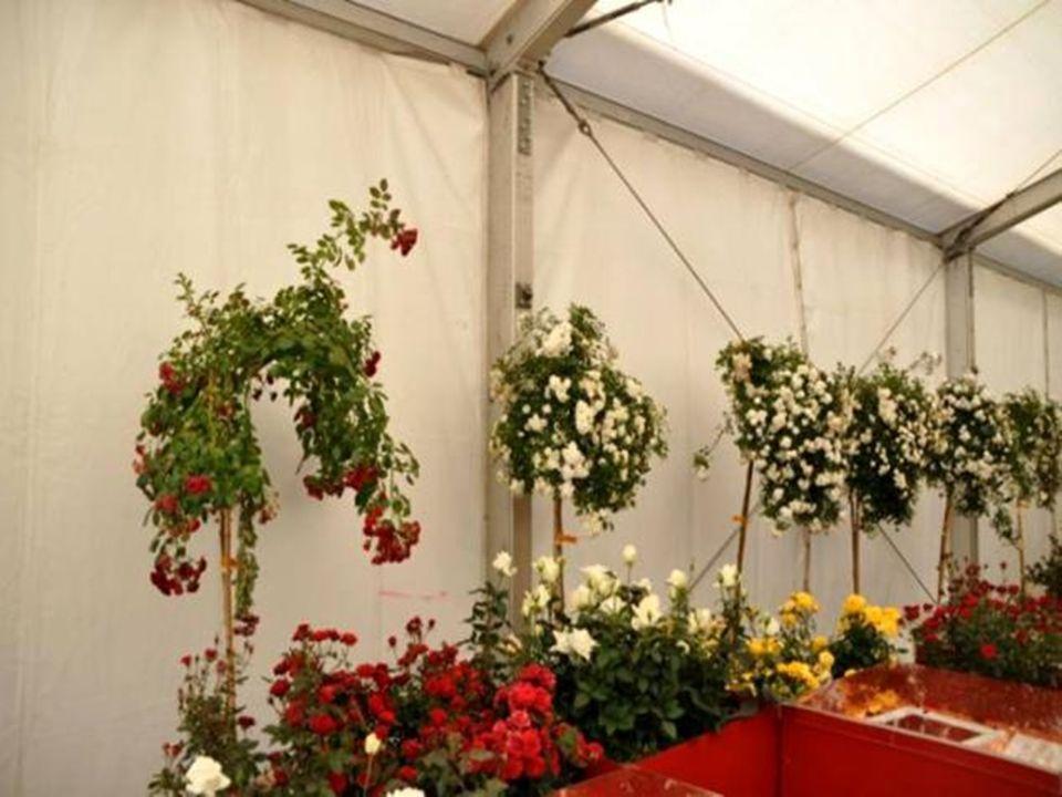 Les pétales de roses sont le symbole de lespoir et sont traditionnellement associés aux cérémonies de mariage.
