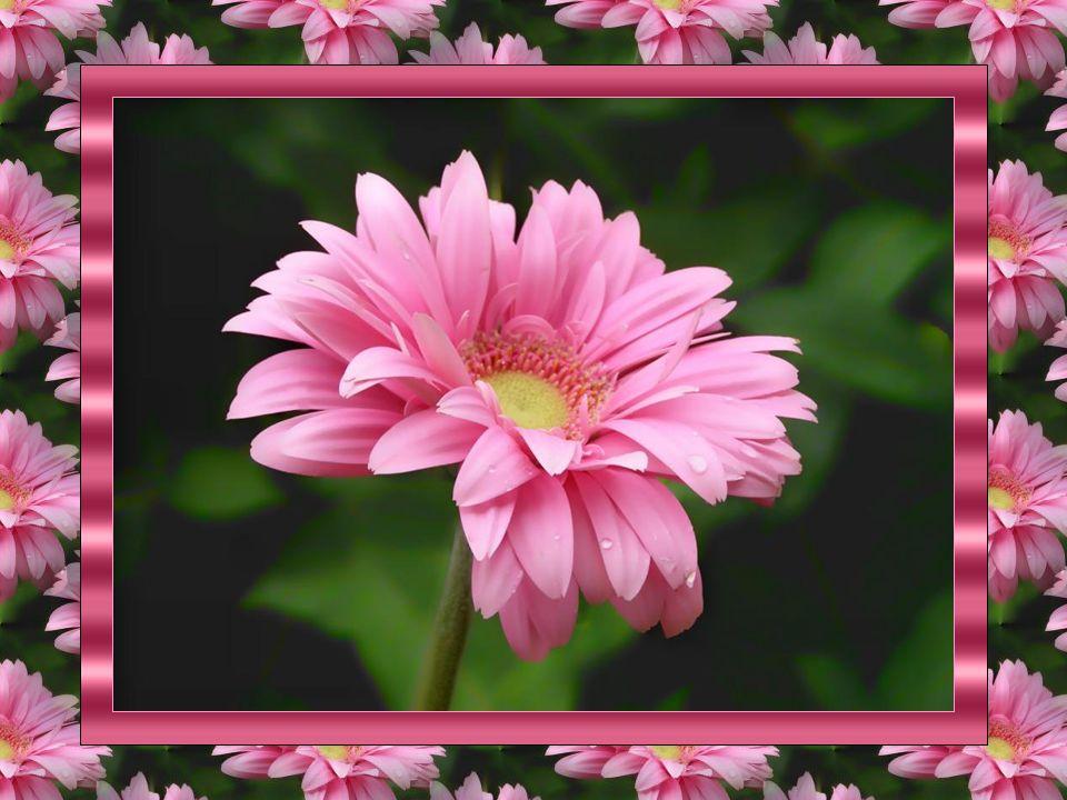 L'Ami(e ) ne jalouse jamais l'amour, mais indirectement l'Amour envie l'Ami( e). Car il pense qu'il prend sa place. Mais c'est une utopie…Un besoin év