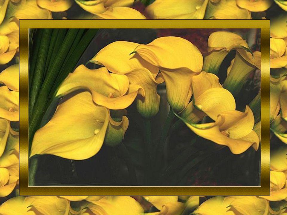 Un(e ) Ami(e ) est notre petite voix intérieure. Notre miroir à deux faces dans lequel nous nous reflétons. Ce sont deux cœurs dans une même âme dans