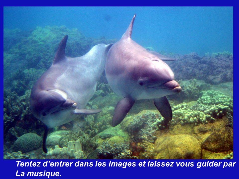 Un dauphin dans le ventre de sa Mère