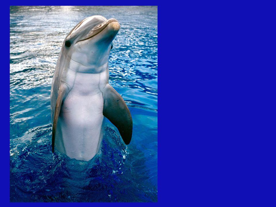 Le message des dauphins est : LAMOUR UNIVERSEL Ce que nous enseignent les dauphins est simplement la joie de jouer le jeux et non pas son prix,lamour pour lamour,une ouverture pour ses frères connus ou pas.