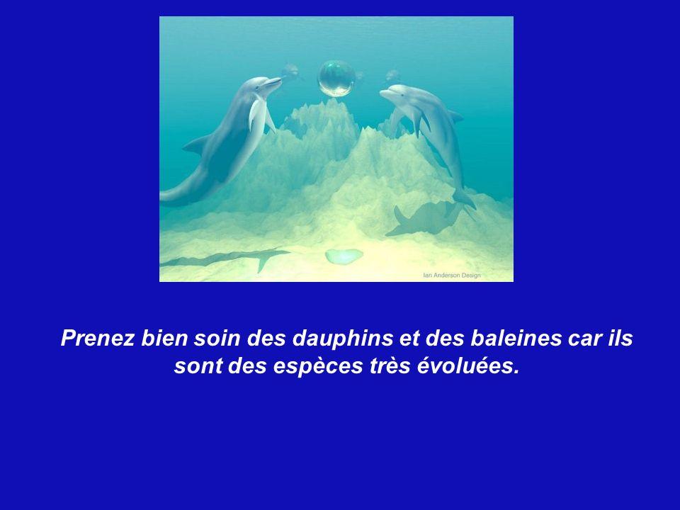 Les dauphins adorent les humains