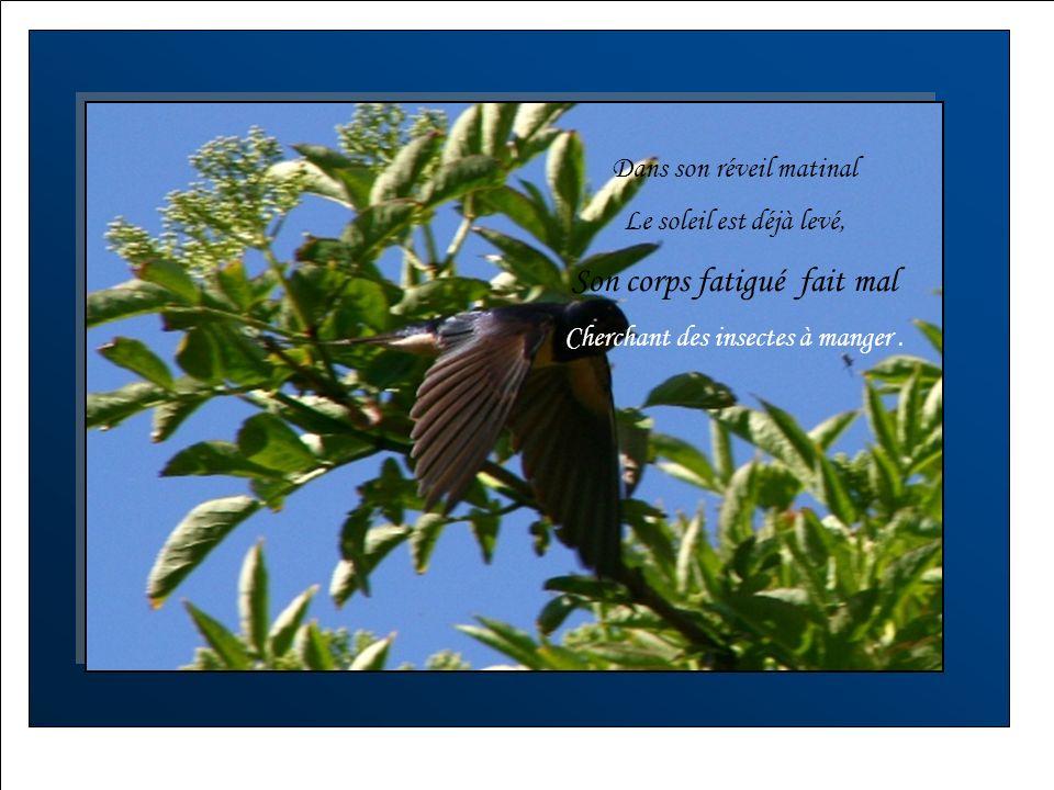 Cherchant lendroit idéal Pour bien se reposer, Afin doublier son long parcours Et bâtir son nid pour l`été.