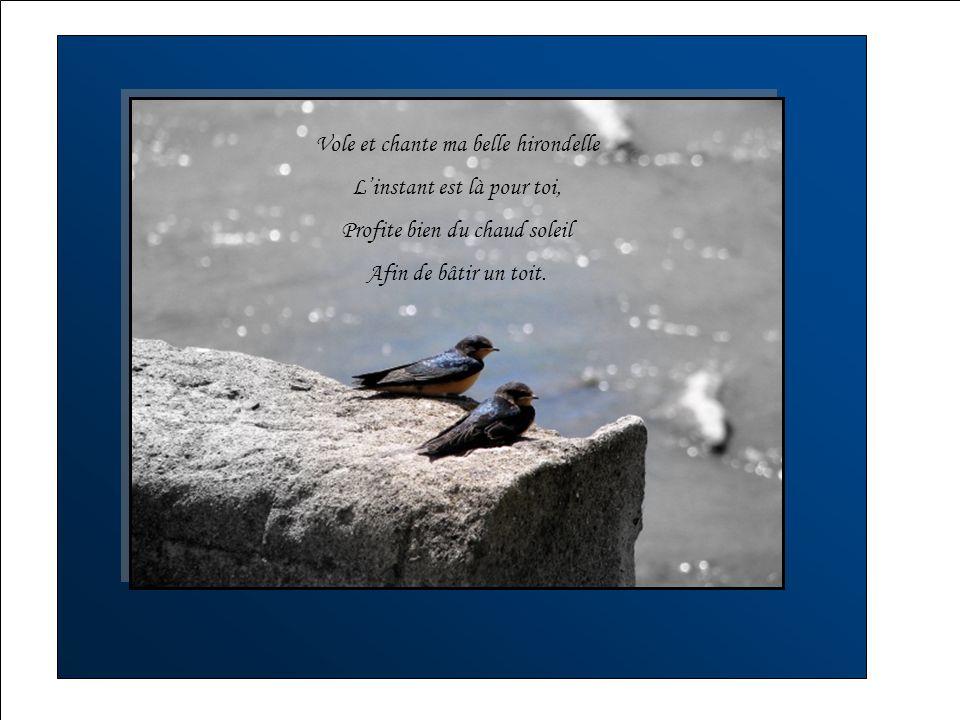 Survolant de branches en branches Son chant appelle à l`amour, Un compagnon du Dimanche Pour l`accompagner nuit et jour.