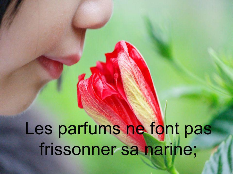 Les parfums ne font pas frissonner sa narine;