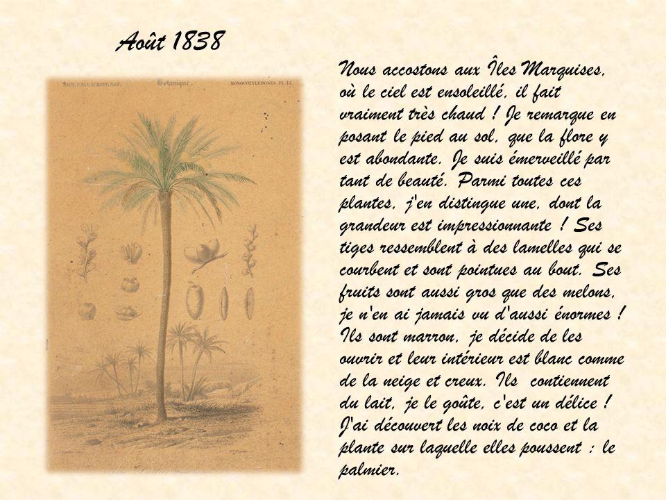 Août 1838 Nous accostons aux Îles Marquises, où le ciel est ensoleillé, il fait vraiment très chaud ! Je remarque en posant le pied au sol, que la flo