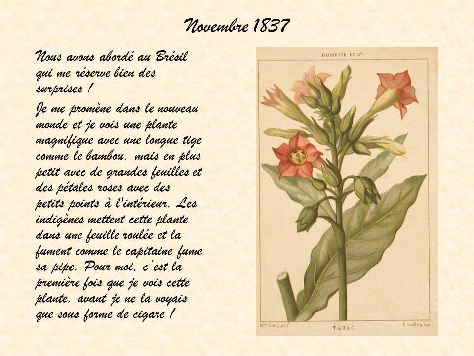 Novembre 1837 Nous avons abordé au Brésil qui me réserve bien des surprises ! Je me promène dans le nouveau monde et je vois une plante magnifique ave