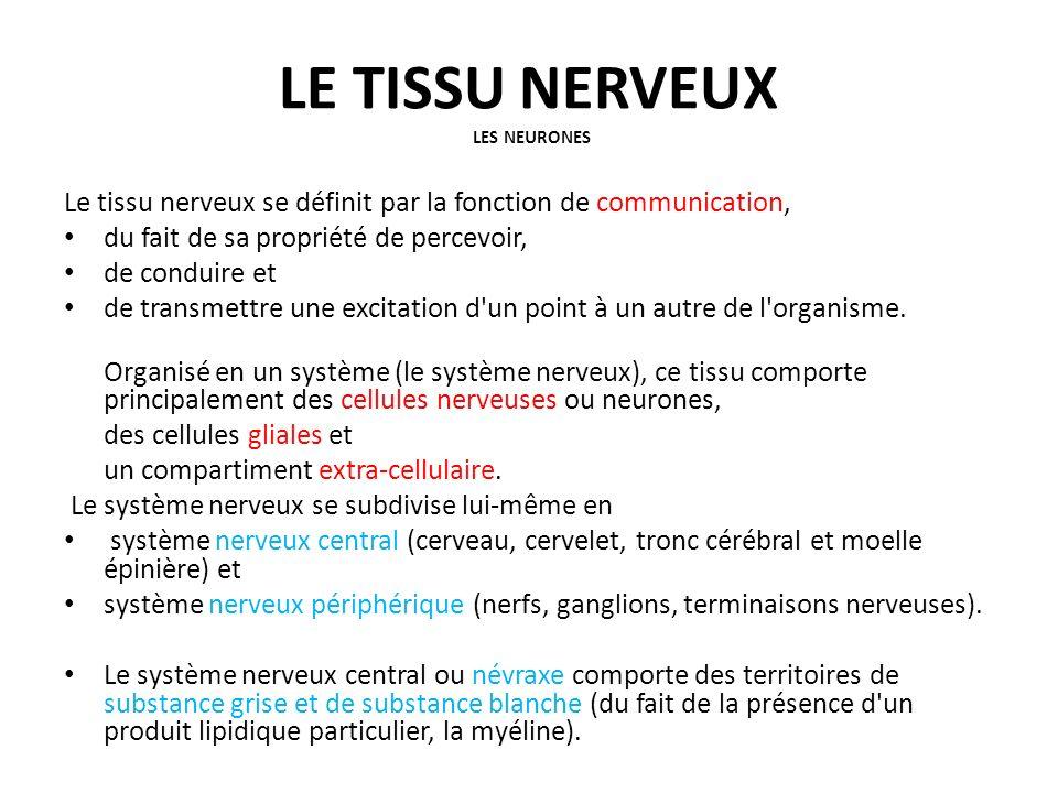 LE TISSU NERVEUX LES NEURONES Le tissu nerveux se définit par la fonction de communication, du fait de sa propriété de percevoir, de conduire et de tr