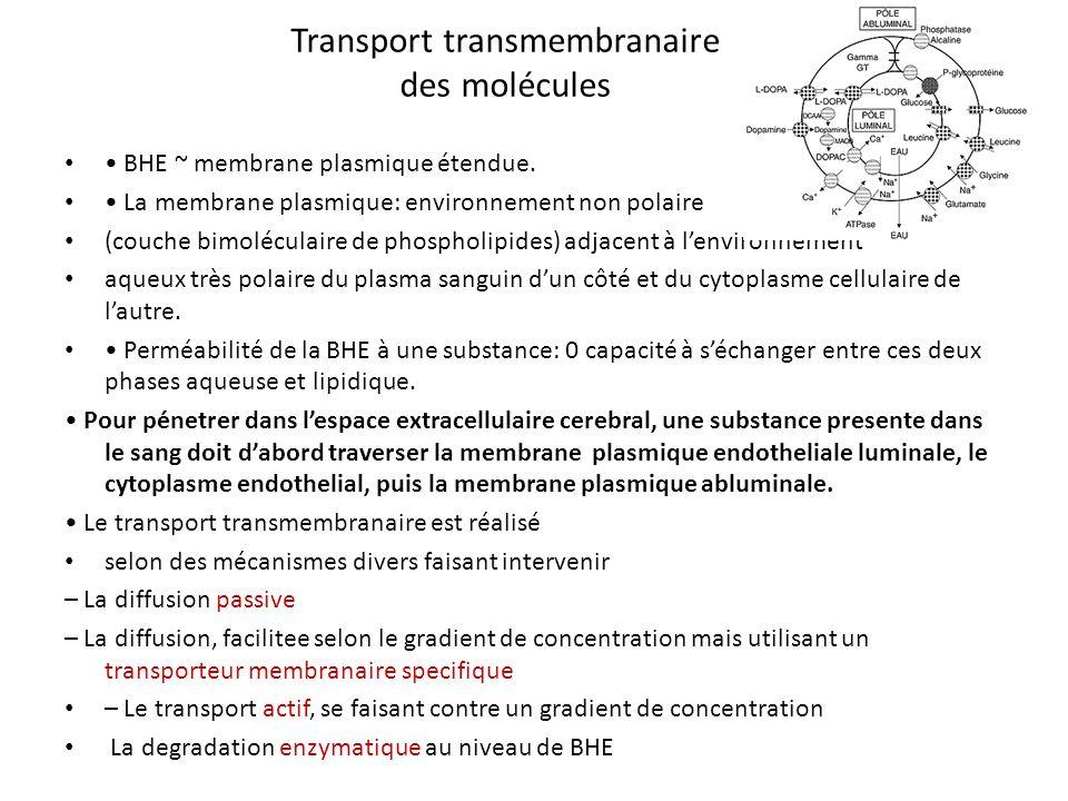 Transport transmembranaire des molécules BHE ~ membrane plasmique étendue. La membrane plasmique: environnement non polaire (couche bimoléculaire de p