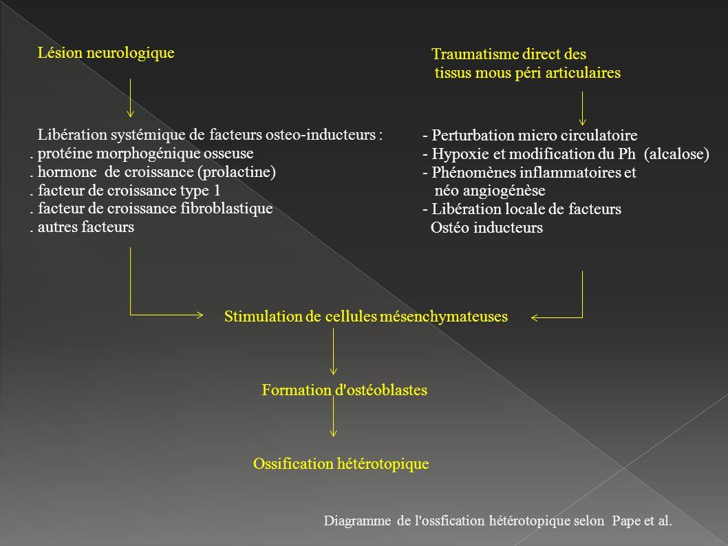 Lésion neurologique Libération systémique de facteurs osteo-inducteurs :.