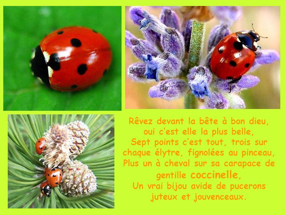 Violette ou blanche la glycine, plante grimpante, à la floraison généreuse et délicieusement odorante