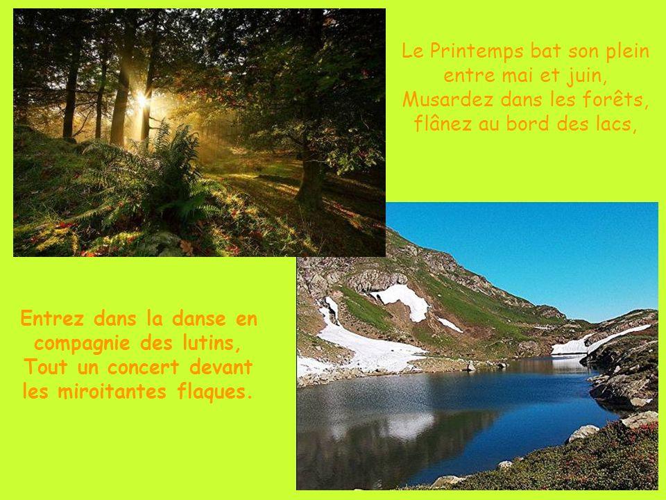 Le Printemps bat son plein entre mai et juin, Musardez dans les forêts, flânez au bord des lacs, Entrez dans la danse en compagnie des lutins, Tout un concert devant les miroitantes flaques.