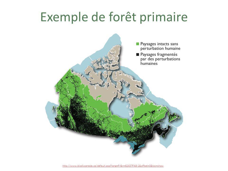 AMÉNAGEMENT DU TERRITOIRE FORESTIER DE LAMAZONIE