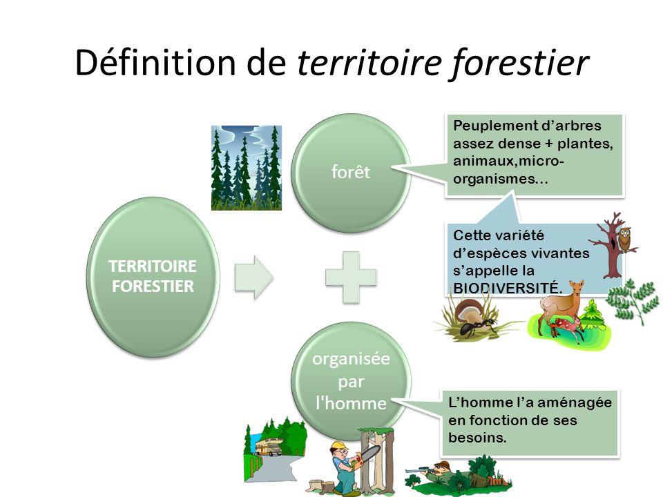 Image dune forêt Source: http://www.photolib.noaa.gov/htmls/amer0085.htm