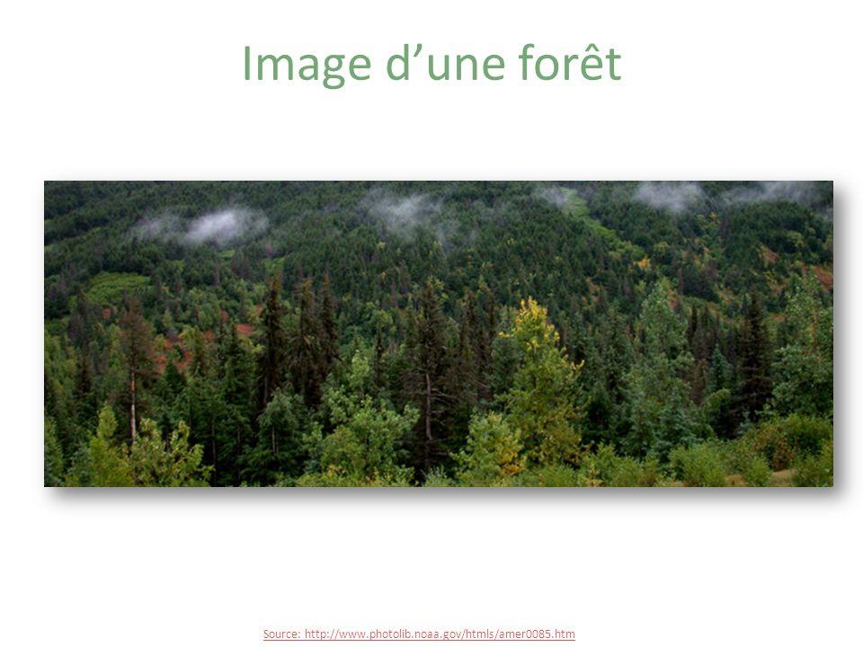 Image dun territoire forestier http://www.photolib.noaa.gov/bigs/wea01535.jpg