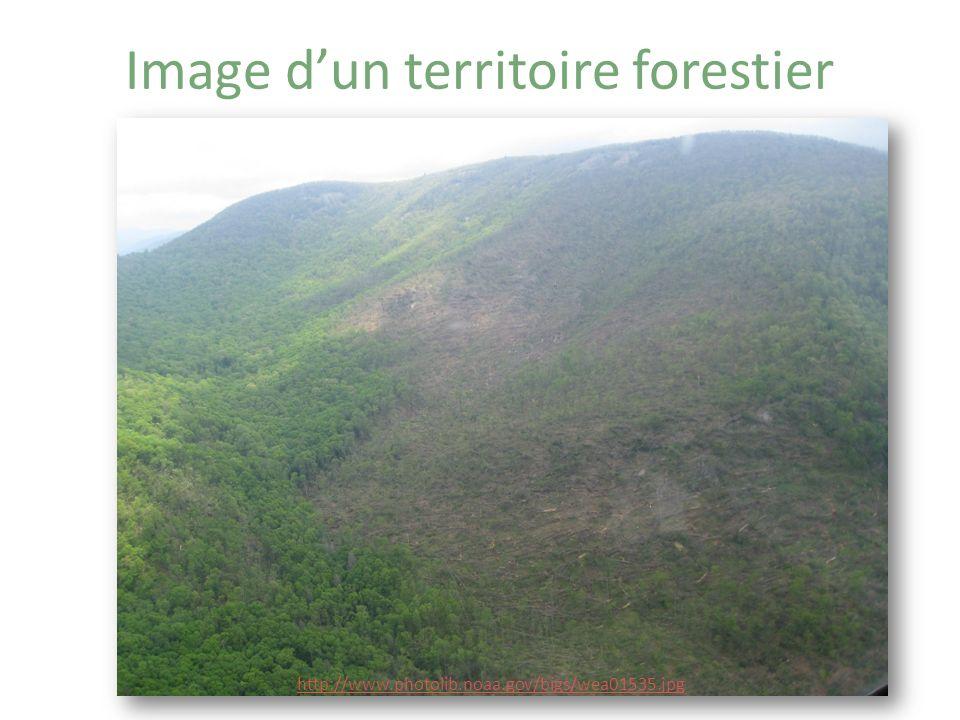 http://www.actionboreale.qc.ca/foret/desastre.html Est-ce un territoire forestier.