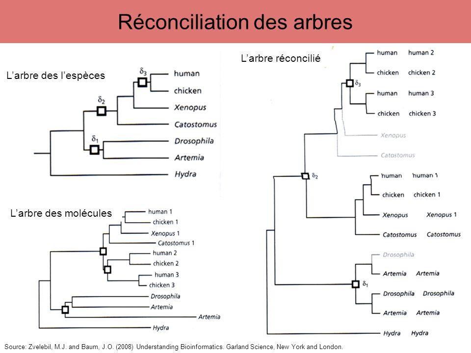 Source: Zvelebil, M.J. and Baum, J.O. (2008) Understanding Bioinformatics. Garland Science, New York and London. 15 Réconciliation des arbres Larbre d