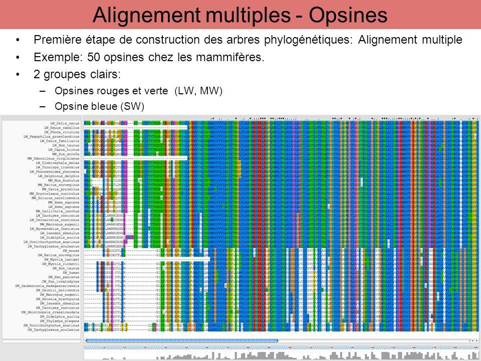 Première étape de construction des arbres phylogénétiques: Alignement multiple Exemple: 50 opsines chez les mammifères. 2 groupes clairs: –Opsines rou