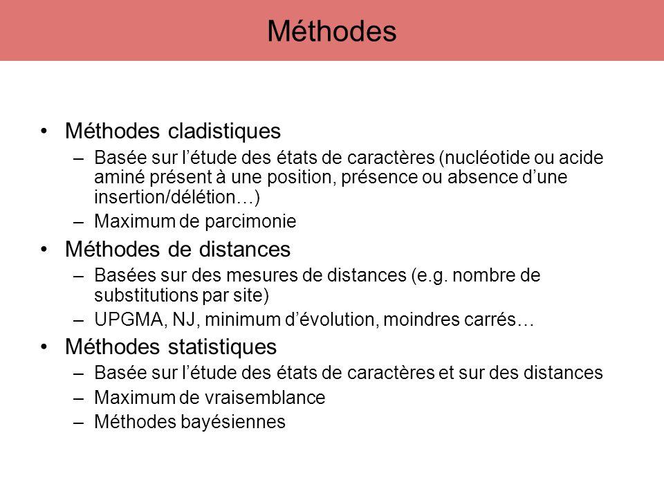 Méthodes cladistiques –Basée sur létude des états de caractères (nucléotide ou acide aminé présent à une position, présence ou absence dune insertion/