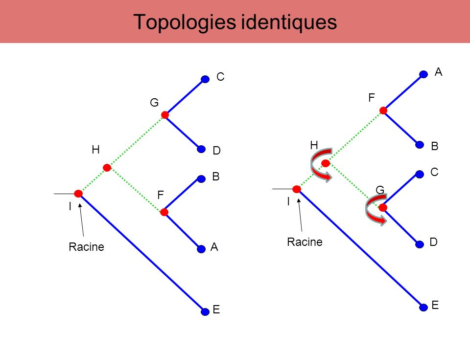 123456789 AAAGAGTTCA BAGCCGTTCT CAGATATCCA DAGAGATCCT A B C D A C B D A D B C Déterminer toutes les topologies possibles 4 UTO => 3 arbres non racinés Maximum de parcimonie - Méthode