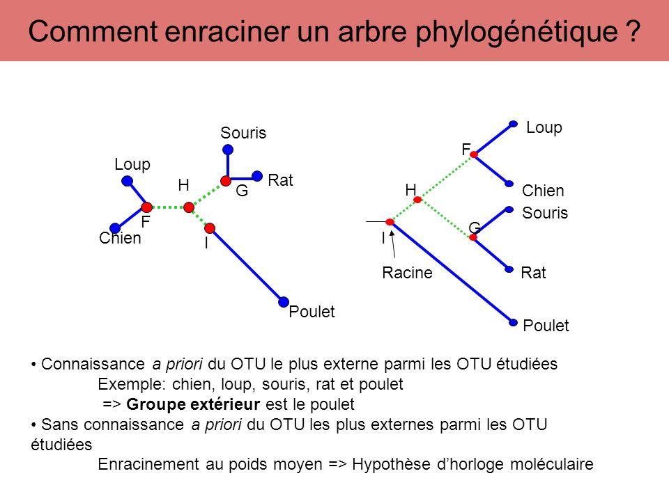 H F G A B C D E I Racine H F G A B C D E I Représentation sans échelle Les longueurs de branches ne sont pas proportionnelles au nombre de changements évolutifs Représentation avec échelle (nombre de substitutions, nombre de substitution/sites) Les longueurs de branches sont proportionnelles au nombre de substitutions ou nombre de substitutions/sites qui se sont produites le long de la branche Échelle dun arbre phylogénétique 0,1