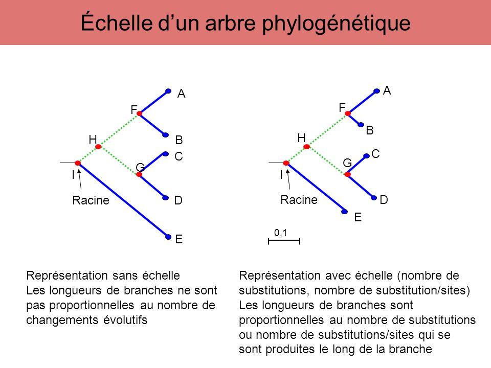 H F G A B C D E I Racine H F G A B C D E I Représentation sans échelle Les longueurs de branches ne sont pas proportionnelles au nombre de changements