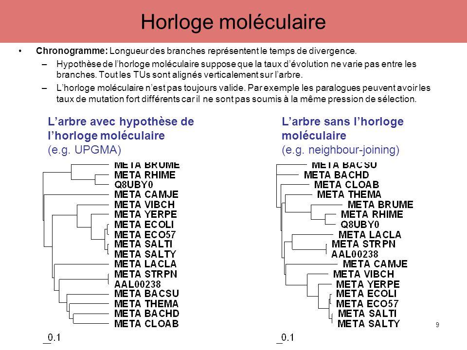 Chronogramme: Longueur des branches représentent le temps de divergence. –Hypothèse de lhorloge moléculaire suppose que la taux dévolution ne varie pa