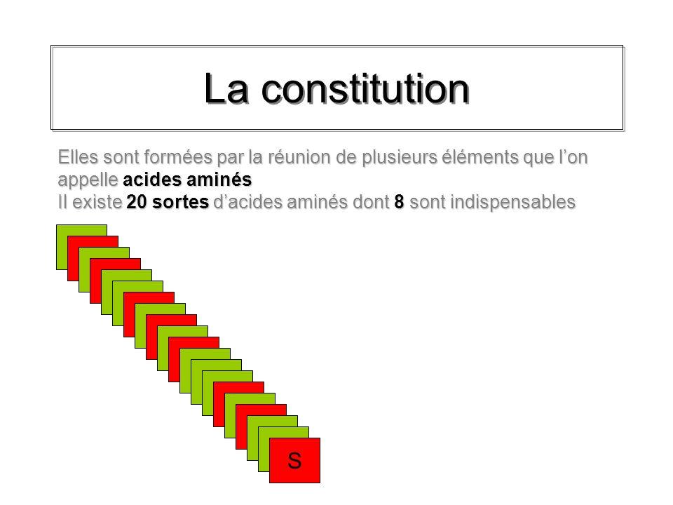La constitution AN Lorsque deux acides aminés se lient, une peptide se constitue et de leau se forme AN De cette façon, beaucoup dacides aminés différents peuvent se lier en longues chaînes